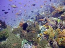 snorkeling spot at Lombok