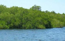 mangrove forest at gili sulat
