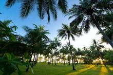 palm tree sire beach lombok